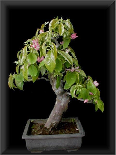 dagmar 39 s bonsai insel berlin bonsai bonsaischalen handget pfert indoor outdoor galerie. Black Bedroom Furniture Sets. Home Design Ideas